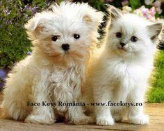 Face Keys România : Privitul fotografiilor cu pui drăgălaşi de animale...