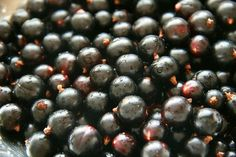 How to Use Black Currant Oil for Hair Loss and Better Health http://superfoodprofiles.com/black-currant-oil-hair-loss-better-health