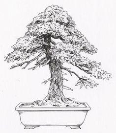 Bonsai Moyogi - volně vzpřímený (Informal Upright)