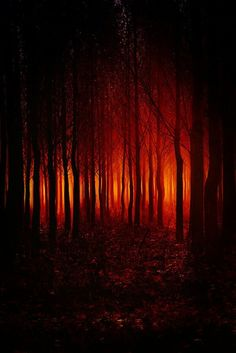 Image result for Forest fire tree