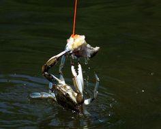 crabbing with chicken necks   Crabbing! Many great memories going crabbing in Port Arthur, Texas ...