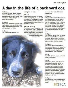 : ( so sad. Don't let your dog be a backyard dog. They love you so much & they deserve so much more than this…