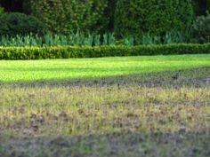 New grass.