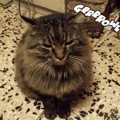 No photo Please !   #Buonanotte dal #grumpycat #Tony di casa ;-)   #Goodnight #Sleeptime #sleep #catsofinstagram #cats #ilovemycat #instacat #cutecats #sweetcats #lovelovelove #lovecat #cats #pets #animals #photooftheday #ilovemycat #nature #catoftheday #lovecats   #catsmylove #gatti #dolcigatti #dolcicuccioli #ioamoglianimali #MIAO :-)