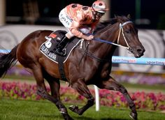 Black Caviar retires undefeated in her lifetime, with 25 wins. A truly extraordinary mare.