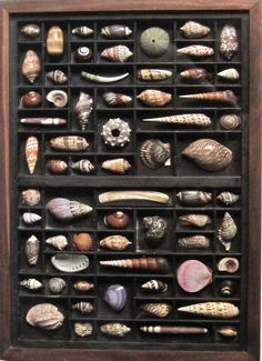 Sea shells displayed in a printer's box, this is such a great idea!