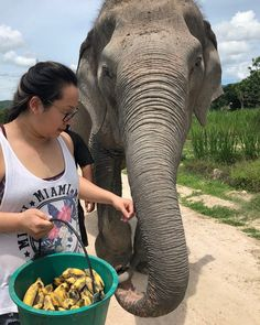 INSYNC PHYSIO's Jenn Lam, RMT, recently returned from her ele-phantastic trip to Thailand! 🇹🇭 Jenn got to feed, walk, and bathe the rescued elephants from riding facilities at the Elephant Sanctuary 🐘 Swipe left to see the Temple Wat Arun in Bangkok, Jenn getting a famous Taiwanese shampoo massage 💆🏻♀️, and a beach in Phuket 🏝 Beaches In Phuket, Elephant Sanctuary, Thailand Travel, Elephants, Bangkok, Temple, Massage, Shampoo, Animals