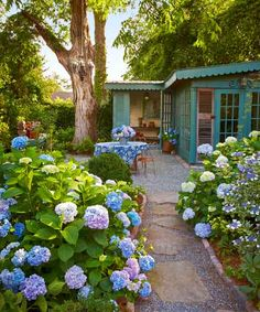 All About Hydrangeas For generations, these beloved shrubs have charmed with their big blooms and carefree nature By Andrew Keys of This Old House magazine Garden Structures, Garden Paths, Garden Landscaping, Hydrangea Colors, Hydrangeas, Hydrangea Care, Smooth Hydrangea, Climbing Hydrangea, Flowering Shrubs