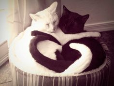 Valentine's Day: Heart, Hearts Everywhere.... (22)
