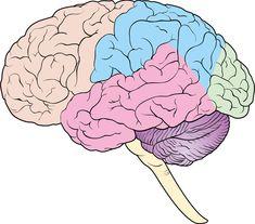 57 Best Brain Diagram images | Neuroscience, Health, Knowledge