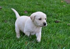 7 Steps To House Train Your New Puppy (Part 1) | Train Your Dog Today