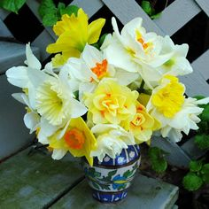 Soon the Daffodils will be blooming!.....Mixed Bouquet of Daffodil Flowers  Photograph © Kerry Michaels