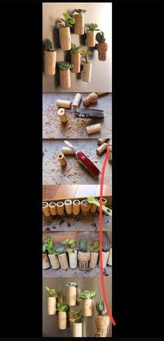 Cork screw plants