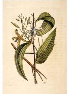 Vanilla-beautiful illustration!