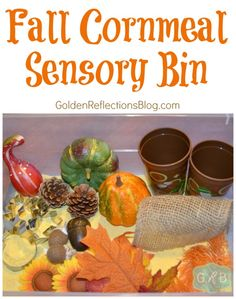 A fall inspired cornmeal sensory box for toddlers and preschoolers. www.GoldenReflectionsBlog.com