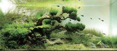 Top 10 aquascapes in 2008 ADA Aquatic Plants Layout Contest - 3rd Place
