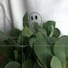 - ̗̀ plants are friends ̖́- Plant Aesthetic, Japanese Aesthetic, Aesthetic Colors, Aesthetic Grunge, Aesthetic Photo, Aesthetic Green, Feeds Instagram, Foto Instagram, Tumblr Art