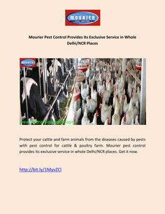 Mourier Pest Control Provides Its Exclusive Service in Whole Delhi/NCR Places  Protect your cattle and farm animals from the diseases caused by pests with pest control for cattle & poultry farm. Mourier pest control provides its exclusive service in whole Delhi/NCR places. Get it now.