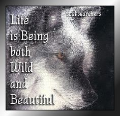 Life is being both... wild and beautiful