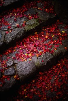 Autumn Leaves in Japan Dark Autumn, Foto Art, Wabi Sabi, Autumn Leaves, Red Leaves, Maple Leaves, Autumn Nature, Falling Leaves, Belle Photo