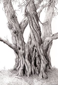 Taxus baccata or yew in pen and ink Indian Wall Art, Snake Art, Art Basics, Bonsai Art, Tree Illustration, Ink Pen Drawings, Picture On Wood, Tree Art, Pyrography