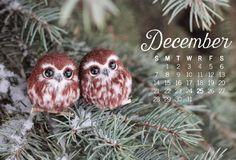 Owl Desktop Wallpaper calendars