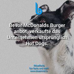 #bluefacts #fakten #weisheit #wisdom #zitat #quote #spruch #mcdonalds #food #foodporn #typography
