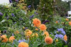 Orange and blue in the garden.  Claus Dalby