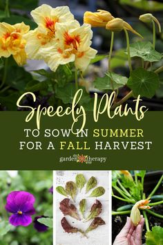 speedy plants to sow in summer for a fall harvest - Garden Therapy