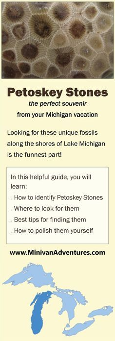 Stones: Where to Find Them and How to Polish Them Petoskey Stones - The Perfect Souvenir from your Michigan Vacation! What are Petoskey Stones Petoskey Michigan, State Of Michigan, Northern Michigan, Michigan Facts, Charlevoix Michigan, Ludington Michigan, Traverse City Michigan, Holland Michigan, Oklahoma