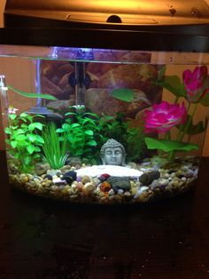 Tropical Fish 5 Gallon Bowfront With Sponge Filter Home To 2 African Dwarf Frogs Lilly And