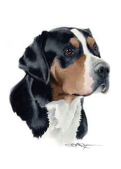 Greater Swiss Mountain Dog Art ACEO Print Signed DJR | eBay