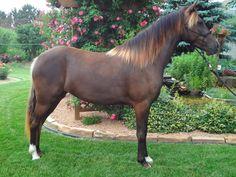 Mountain Pleasure Horse mare Rocky Pines SD Makin Change
