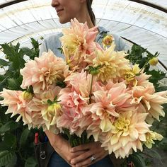 One of my favorite dinner-plate varieties, these 'Breakout' Dahlias have been steadily cranking out armloads of long, strong stemmed blooms all season. They are great in large arrangements and have a surprisingly long vase life for looking so delicate. #growfloret