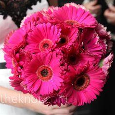 I love gerber daisies