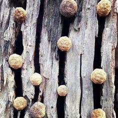 COLLABORATIONS with NATURE, ephemeral artist SHONA WILSON