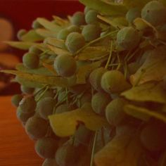 Букет из соцветий липы. Преподаватель @aijazagarina #boquete#my_work#my_idea#floristry#florist#我#linden_flowers#flowers#green#blumengruss#blumengruß#花#флористика#семинары_aijazagarina#учеба#