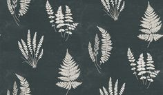 Botanica (CH9106/095) - Carlucci di Chivasso Wallpapers - A botanical fern print. Each fern has been hand painted with watercolours and placed on a stunning foil background for a more contemporary feel. Shown here in white - more colours are available. Please request a sample. Paste-the-wall