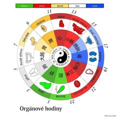 Diagnostika nemocí dle orgánových hodin