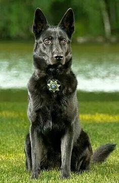 What a beauty . . . . Law Enforcement Today www.lawenforcementtoday.com
