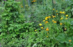 vegetable garden | Petals and Wings