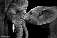 Presenta la imagen más tierna, una madre elefante y su hijo.