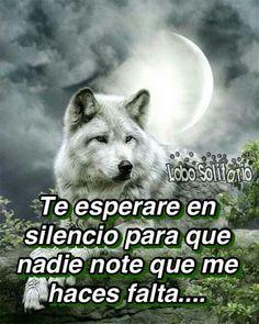 Mejores 45 Imagenes De Lobo Herido En Pinterest Wolves Wolf Y