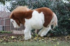 The 12 Most Adorable Miniature Horses on the Web