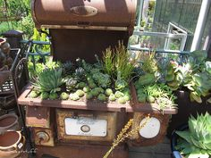 Estate Liberty succulent stove | Flickr - Photo Sharing!