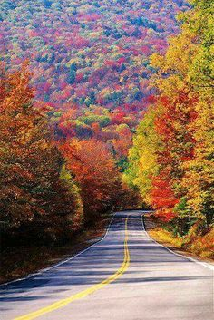 Have you ever seen foliage in the New England States?