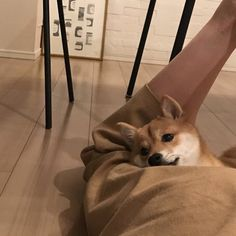 Find images and videos about vintage, grunge and pale on We Heart It - the app to get lost in what you love. Shiba Inu, Cute Funny Animals, Cute Dogs, Pets 3, Cute Creatures, Dog Pictures, Doge, Animals And Pets, Fur Babies