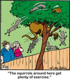 Today on Marmaduke - Comics by Brad Anderson Dog Quotes, Animal Quotes, Dog Sayings, Funny Sayings, Cartoon Dog, Dog Cartoons, Jokes Pics, Crazy Dog Lady, Great Dane Dogs