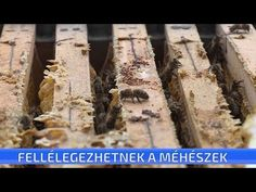 Úgy tűnik, megállítható lesz az évek óta tartó rendkívüli méhpusztulás - YouTube Evo, Youtube, Crafts, Tunics, Manualidades, Craft, Youtubers, Crafting, Handicraft