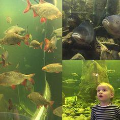 Viikonloppumatkalla Kotkassa  #maretarium #maretariumkotka #kotka #matkalla #kotimaanmatkailu #finland #akvaario #akvárium